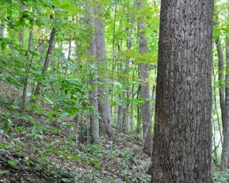 01-HAMILTON FOREST