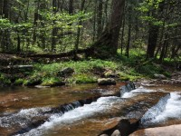 PENCE SPRINGS FOREST <br /> 1,272 +/- ACRES
