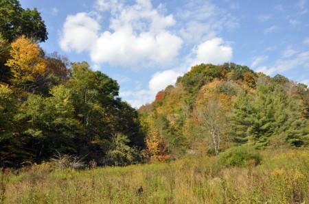 01-URBAN FOREST