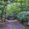 07-RED SPRINGS FOREST 62-006