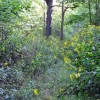 09-RED SPRINGS FOREST 62-008