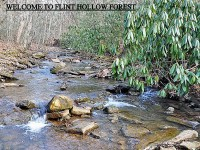 FLINT HOLLOW FOREST<br />334+/- ACRES