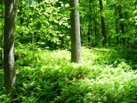 WHITE ROCK FOREST - 47.81 ACRES +/-