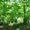 11 GREENBRIER PINES LOT 9 TOUR RESIZE