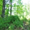GREENBRIER PINES LOT 15A TOUR RESIZE (6)