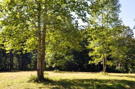 Ridge View Forest Tour 002