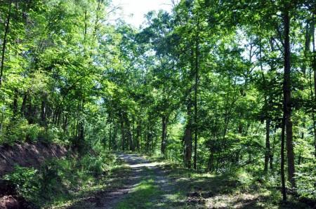 Ridge View Forest Tour 003