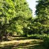 Ridge View Forest Tour 004