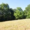 Ridge View Forest Tour 005