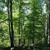 Ridge View Forest Tour 006