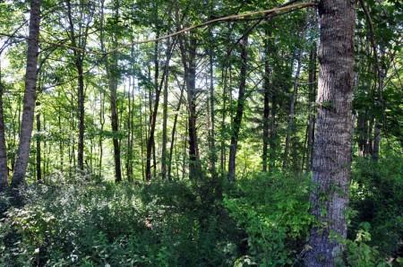 Ridge View Forest Tour 011