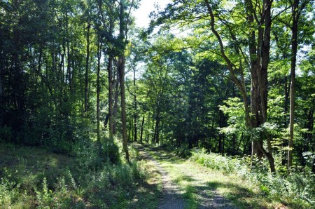 Ridge View Forest Tour 013
