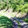 Ridge View Forest Tour 018