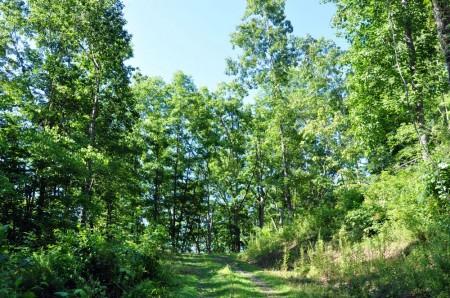 Ridge View Forest Tour 019