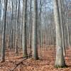 Dotson Forest Tour 004