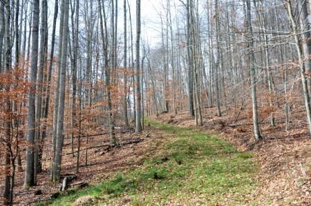 Dotson Forest Tour 005