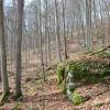 Dotson Forest Tour 006