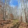 Dotson Forest Tour 008