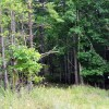 Gap Mountain Forest 003