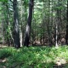 Gap Mountain Forest 004