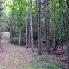 Gap Mountain Forest 005