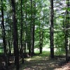 Gap Mountain Forest 006