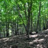 Gap Mountain Forest 007