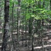 Gap Mountain Forest 008