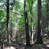 Gap Mountain Forest 009