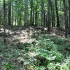 Gap Mountain Forest 011