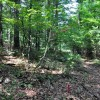 Gap Mountain Forest 016