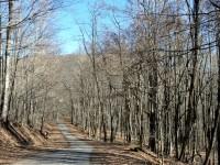ROCKCLIFF FOREST </br>101 Acres