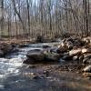 Flynn Creek Forest 001