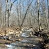 Flynn Creek Forest 002