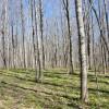 Flynn Creek Forest 003