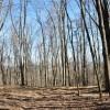 Flynn Creek Forest 004