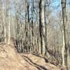 Flynn Creek Forest 005
