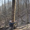 Flynn Creek Forest 009
