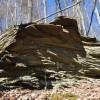 Flynn Creek Forest 010