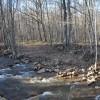 Flynn Creek Forest 011