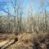 Flynn Creek Forest 012