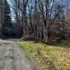 Flynn Creek Forest 015