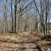 Flynn Creek Forest 016
