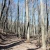 Flynn Creek Forest 017