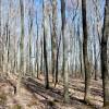 Flynn Creek Forest 018