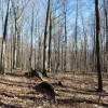 Flynn Creek Forest 019