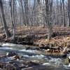 Flynn Creek Forest 020