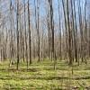 Flynn Creek Forest 021