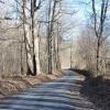 Flynn Creek Forest 022