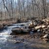 Flynn Creek Forest 024